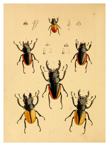 011-The cabinet of oriental entomology…1848- John Obadiah Westwood