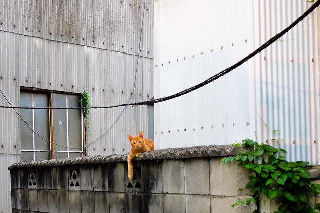 Today's Cat@2011-08-31