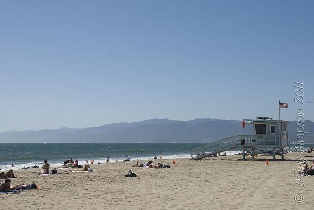 D1 venice beach
