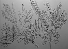 Herbs (Pen and Ink Sketch) by randubnick