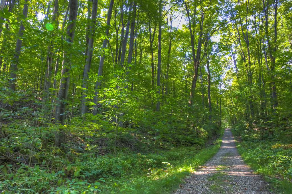 Gatineau Park Path