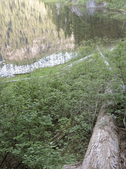 Reflection and Log (Jrk3) Tags: dorothylake alpinelakeswilderness wahiking
