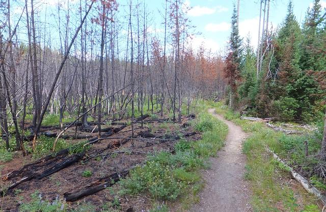 na een bosbrand