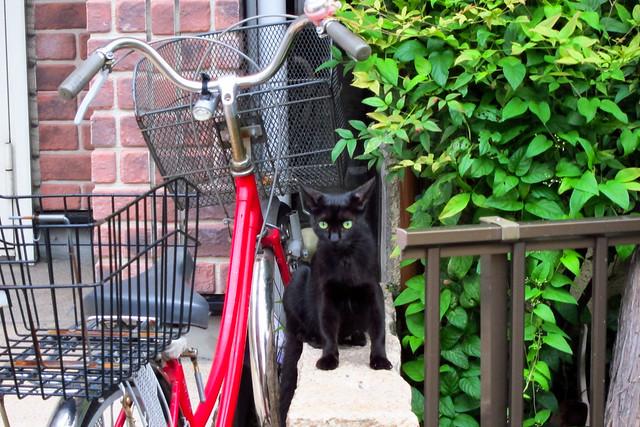 Today's Cat@2011-09-03
