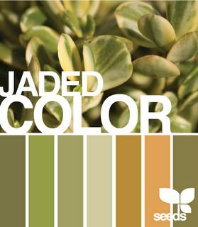 DesignSeedJadedColor(1)