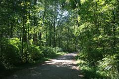 Weg im südlichen Schlosspark Nymphenburg