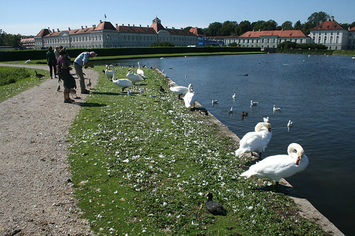 Schwanenwiese vor Schloß Nymphenburg