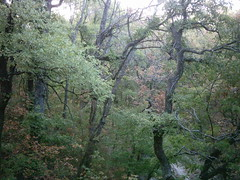 riparian trees