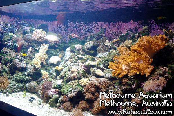 MELBOURNE AQUARIUM-0