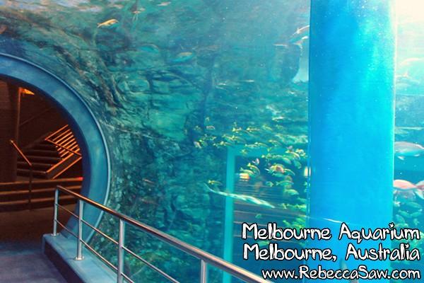 MELBOURNE AQUARIUM-03