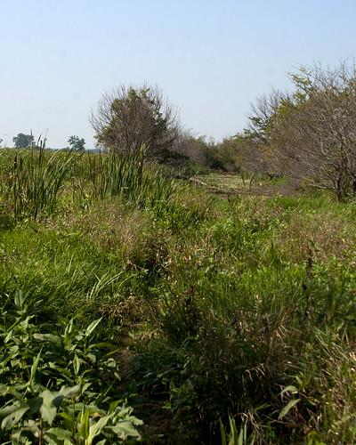 08312011JGW-EmiquonClarkRoad-Wetland_MG_1911