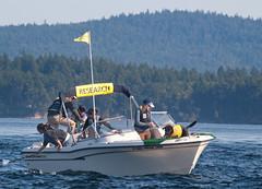 dog uw boat labrador olympus scat september research whale e3 tucker 70300mm universityofwashington zuiko killerwhale sanjuanisland 2011 centerforconservationbiology oceanecoventures