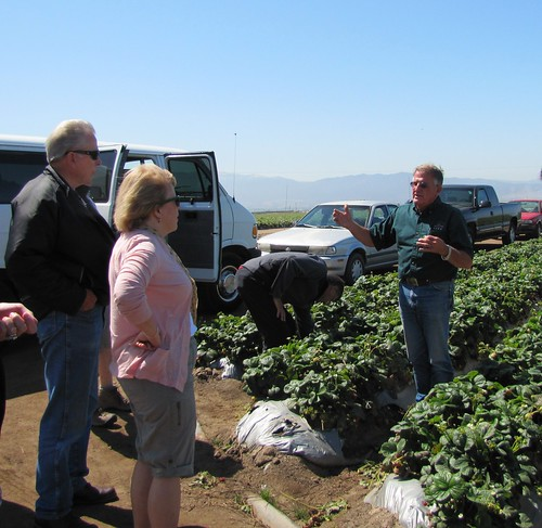 Ken discusses the strawberry growing process