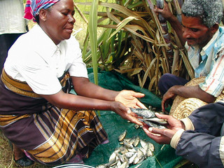Exchange of processed fish, photo by WorldFish, 2005