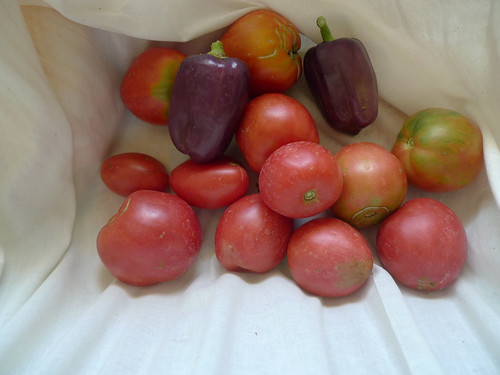 tomatoes and purple peppers