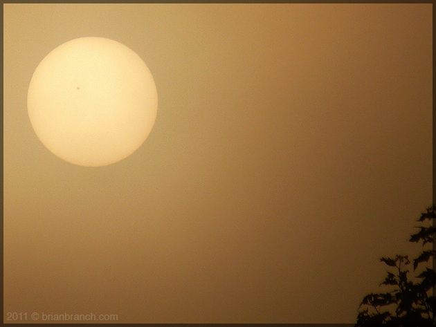 P1190118_sunspot