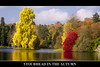 Stourhead in the Autumn (ORIONSM) Tags: autumn trees reflection stourhead nationaltrust youmademyday colorphotoaward artistoftheyearlevel3 artistoftheyearlevel4 artistoftheyearlevel5