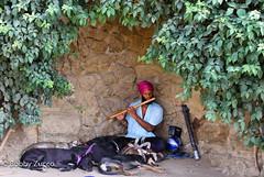 Dogs in Guell park barcelona (ZUCCONY) Tags: barcelona parque music ny del de europe all sleep el his bobby perros them guell 2010 flautista encantador lulls zucco bobbyzucco pedrozucco