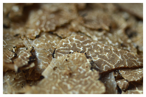 shaved black truffles© by Haalo