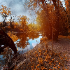 autumn trees by the river - EXPLORED 19/09/11 (ildikoneer) Tags: autumn reflection nature water leaves canon river season landscape eos leaf hungary budapest sigma bank surface mm 1020 danube 40d colorphotoaward