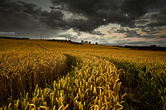 Twilight (.Brian Kerr Photography.) Tags: trees sunset sky clouds canon landscape twilight wheat cumbria fields crops cumbrian highhesket eos5dmkii briankerrphotography