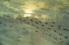Double expo'sdog (Kjell_Doggen) Tags: christmas family blue trees sky urban dog sun white snow cold canon landscape eos bomen exposure blauw sneeuw familie super hond double lucht wit zon kerstmis landschap kerst koud 7200 3000n kr5 plustek opticfilm rickoh