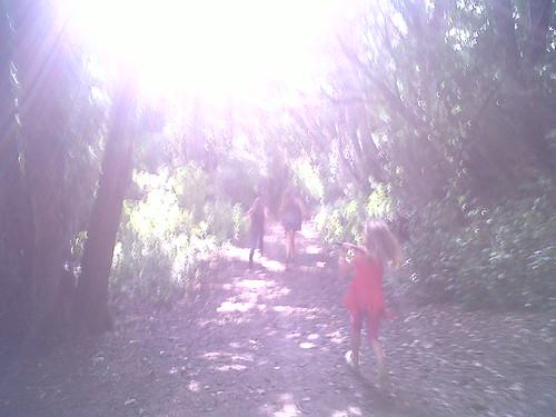 into_the_woods_and_to_the_sun