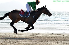 All 4 hooves off the ground at once (alison laredo) Tags: ireland horse beach race jockey mayo races gallop doolough galloping 2011 geesala all4feetoffthegroundatonce wwwalisonlaredocom