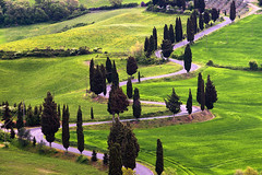 cypress hill (Dennis_F) Tags: road street italien italy green nature zeiss landscape spring italia sony country hill landwirtschaft natur hills tuscany cypress winding grn agriculture fullframe dslr toscana valdorcia landschaft hilly cypresses cypresshill frhling 135mm toskana hgel geschwungen monticchiello zypressen strase 13518 a850 sonyalpha sonydslr vollformat cz135 zeiss135 dslra850 sonya850 sonyalpha850 alpha850 tuscien sony135 sonycz135