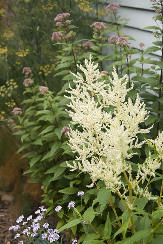 Persicaria and Eupatorium