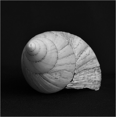Espiral by Cebolledo
