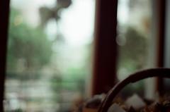 In Yokoneco (SilverYang) Tags: flower film minolta kodak  x700 250d  yokoneco