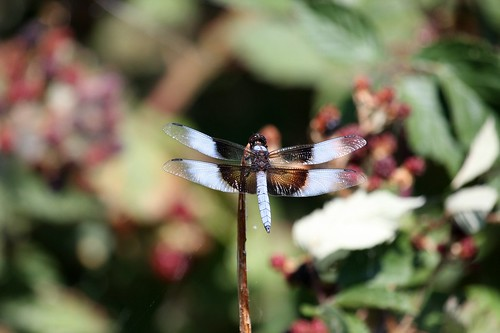1dragonfly dave harper oakley