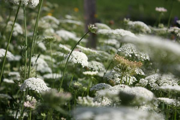 fleurs-montagnes02