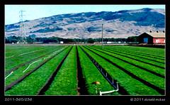 2011-365/236 (DonMcKee) Tags: green nature ecology scenery land environment environmentalism oilpaint ecosystem dominantcolor dominantcolour farmscene project365 farmscape dailyshoot pixelbender pixelbenderoilpaint 3652011 ds647 2011365aug