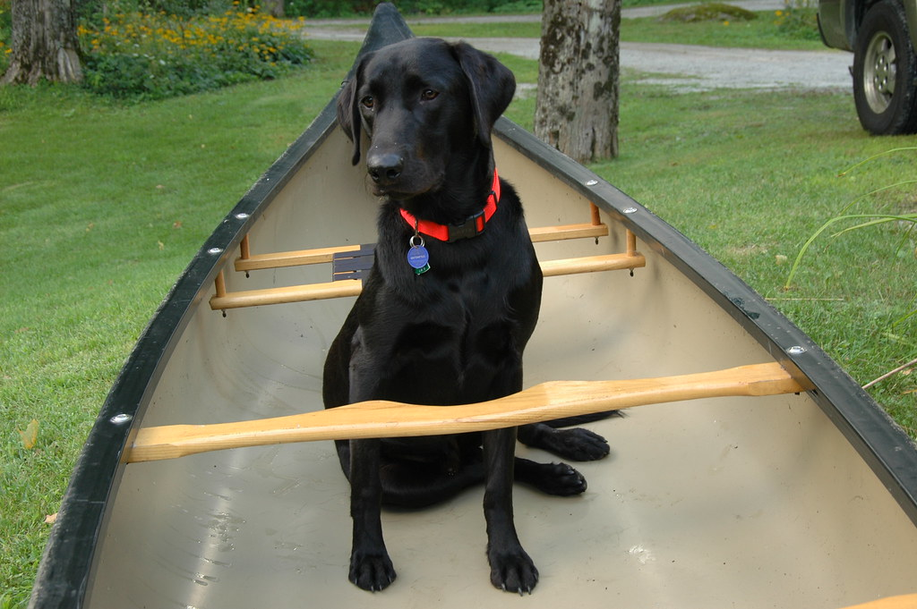 8 Tips to Canoe Training your Dog on OrvisNews.com