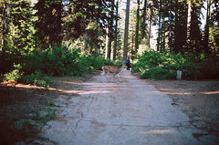 (fauxly) Tags: camping film 35mm analogue sequoia nikonf4