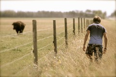 The Boy and the Buffalo (Ken Yuel) Tags: canada buffalo fences manitoba pasture bison grassland sylvain digitalagent kenyuel fencedfridays interlakeranchland ranchbillythekid