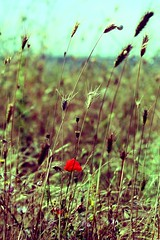 МАК / poppy (lya.inessa) Tags: summer nature grass day snail poppy crimea природа лето крым трава мак