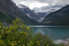 Lake Louise (sylvanbobcat) Tags: travel canada northamerica banff lakelouise banffnationalpark