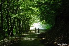 Matese - Strada nel bosco  - Path in the wood (Marioleona) Tags: italy landscape niceshot matese appennini sannio campochiaro mariobrindisi cainapoli mygearandme marioleona