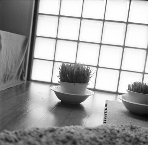 Tomozo_0003_2