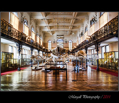 Oceanographic Museum - Monaco - HDR (Margall photography) Tags: museum photography room montecarlo monaco marco hdr oceanographic galletto margall