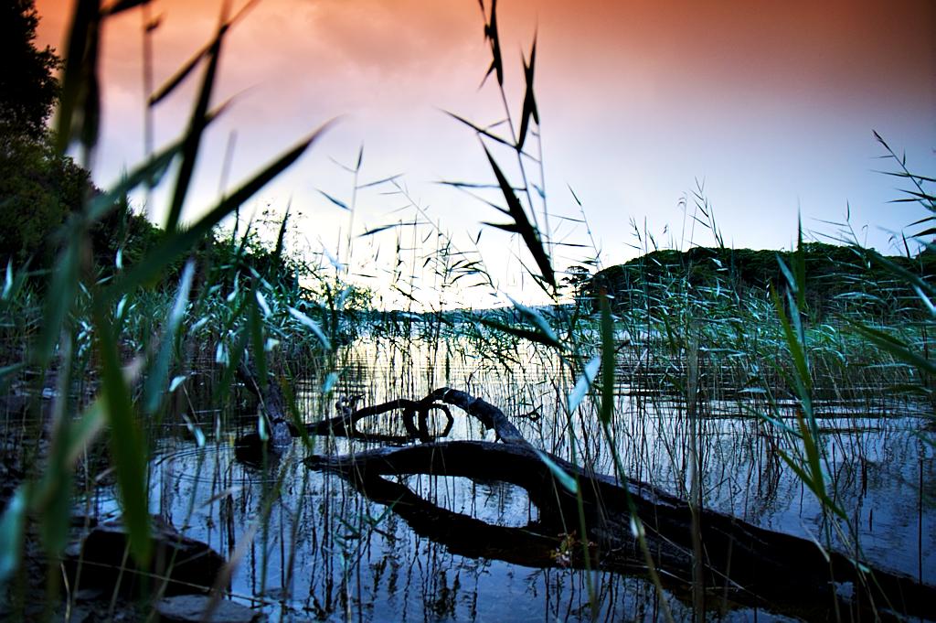 Lake, reeds, Log
