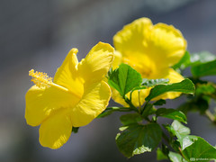 (alex_virt) Tags: flower mamiya samsung 80mmf19 mamiya80mmf19 nx10 samsungnx10