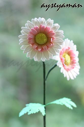 şeker hamurundan gerbera çiçeği