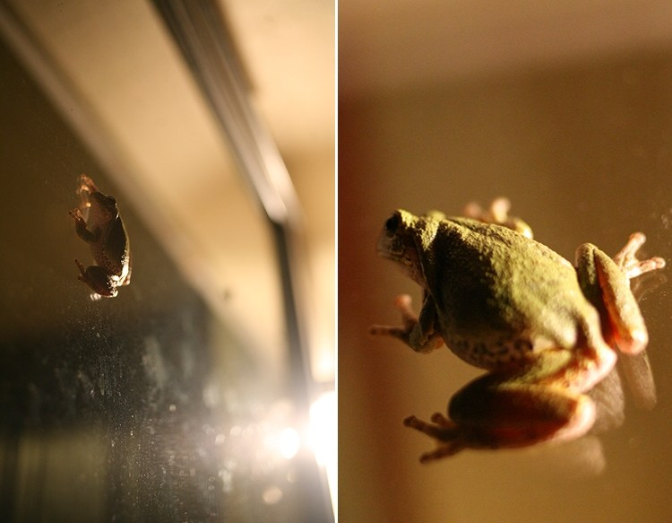 09-03-frog2