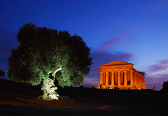 Valley of the Temples - Agrigento - Sicily (Giuseppe Finocchiaro) Tags: blue tree architecture night temple nikon olive temples sicily bluehour albero archeology notte architettura sicilia agrigento tempio ancientgreek ulivo archeologia magnagrecia orablu