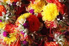 Chudi @ Shraavan (Maitreya 8) Tags: gsb mangalore brahmin chudi kannada konkani dakshina amchigele kodial gowd shraavan saraswath