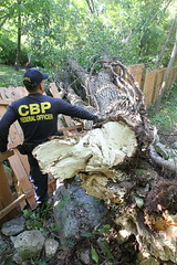 Hurricane Irene Aftermath in New Jersey (CBP Photography) Tags: new york trees homes field fence us cut hurricane border down visit repair damage jersey operations irene protection federal officer customs officers cbp